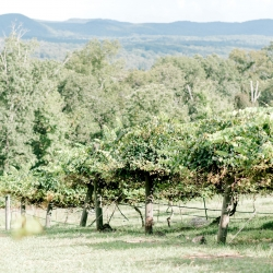 Stony Mountain Vineyards served as the stunning background for a sweet fall wedding coordinated by Magnificent Moments Weddings