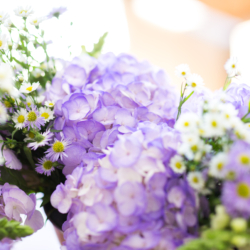 gorgeous purple hydrangeas for an April North Carolina wedding