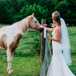 Bride and groom share a moment with the horses at Fort Mill's Dairy Barn during their spring wedding coordinated by Magnificent Moments Weddings