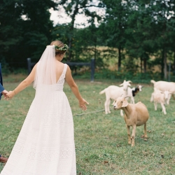 Bride and groom interact with the goats of Morning Glory Farm during their fall wedding coordinated by Magnificent Moments Weddings