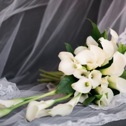 Stunning bridal bouquet created by Carolyn Shepard Design features white calla lilies