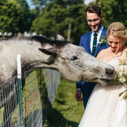 Bride and groom pose with a horse during their spring wedding at The Dairy Barn captured by Alivia Photography